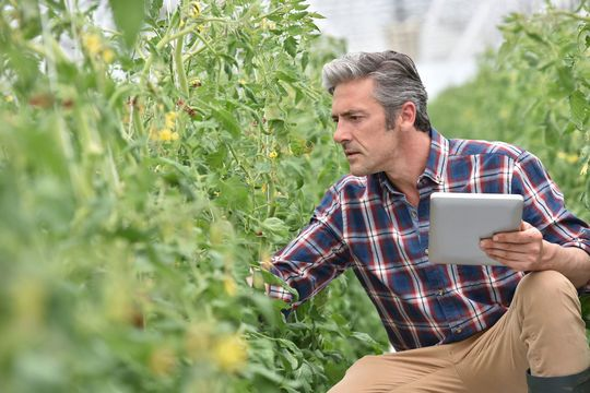 tailored-agricultural-software